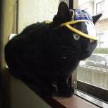 黒猫振興会