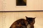 猫にごはん