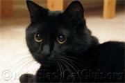 うちの黒猫