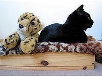 <br /> 寝ていたのは豹だった。