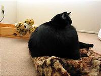 見捨てられる豹と木製ベッド。