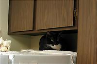 終日冷蔵庫の上で過ごすこーのすけ。