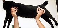 黒猫の標本