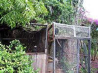 庭には二羽ハゲタカ