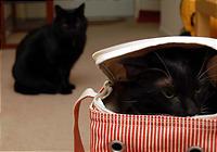 はっ、ここはあの黒い猫のいる家!