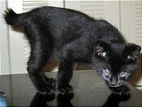ぶさいくだった子猫の頃。