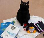 黒猫はお土産ではありません。