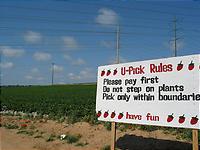 いちご畑の入り口。
