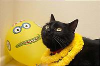 黒猫に黄色はよく似合う。