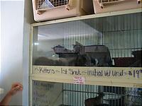 売られてる子猫たち。