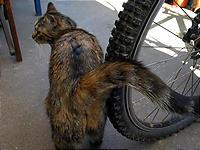 タイヤにすりすりするソフィー。