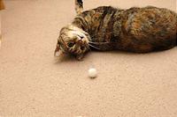あんなところにボールがあるわ。