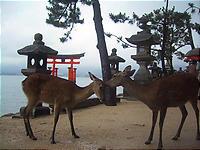 正しい日本の観光地