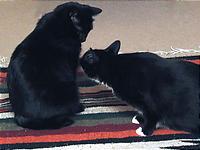 案外良い感じの黒猫2匹。
