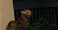 夜のベランダにいる野生動物。