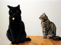 外敵に備える猫たち。