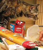 猫も気になる香りの高いアンチョビ。
