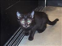 残りものには福がある、黒猫。