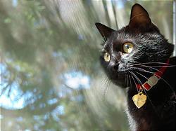 新しいカメラで撮ってみた黒猫。