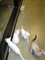 白猫たち!