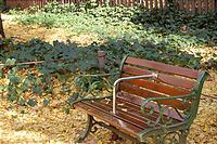 かわいらしいベンチ。