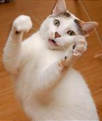 ここでも大人気『Cat Dancer』。