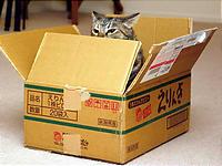 えりんぎの箱のにおいを嗅ぎまくるソフィー