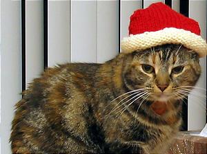 ソフィー帽子