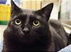 地味な黒猫。